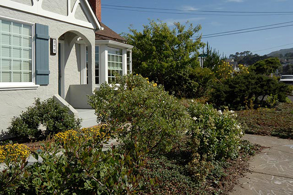 Front yard garden of drought-tolerant plants including manzanita, ceanothus, bush poppy, beach strawberry, and more.