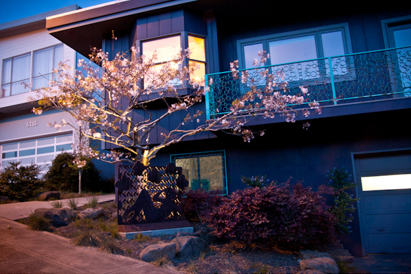 As evening falls, a low-voltage uplight captures the blooming canopy of the tree.