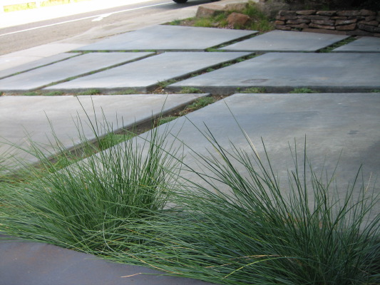 The blue color and clean texture of Festuca 'Siskiyou Blue'