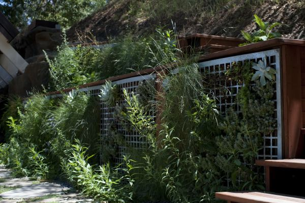 Modern green wall of perforated steel and California native plants.