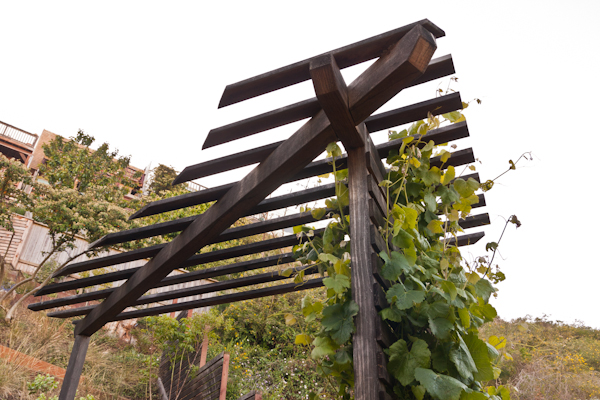 California wild grape, a favorite of birds, climbs up into the custom arbor.