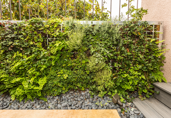 Ferns and strawberries compete for dominance in a free-standing garden green wall composed of perforated steel.
