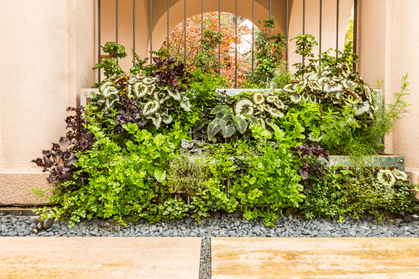 Free-standing green wall as privacy screen in residential kitchen garden